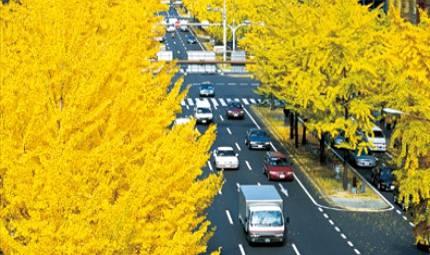 日本秋季自由行推薦必訪銀杏景點關西大阪御堂筋大道