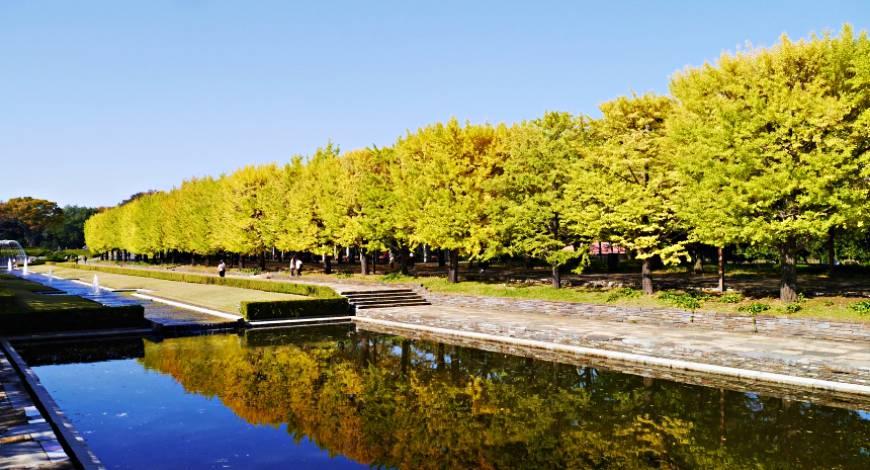 日本秋季自由行推薦必訪銀杏景點東京昭和記念公園