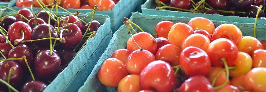 日本有名的车厘子樱桃