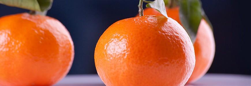 日本有名的柑橘
