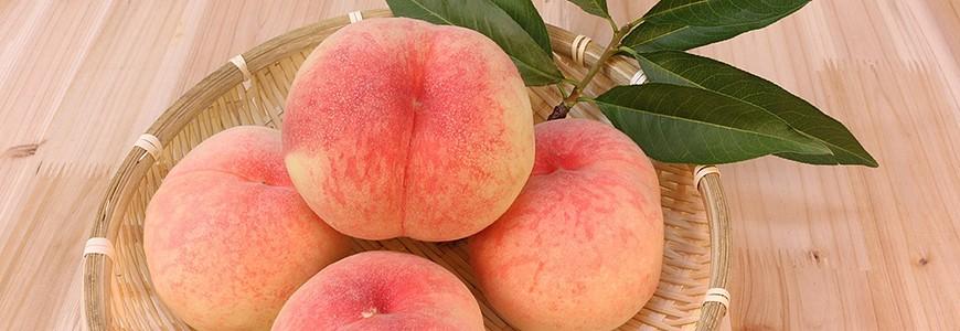 日本有名的水蜜桃