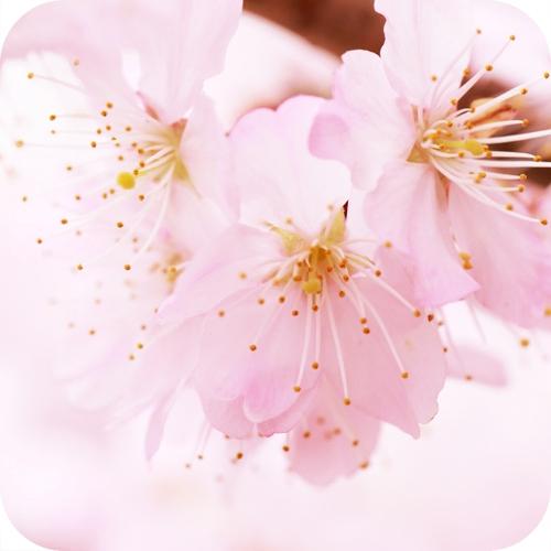 日本传统色和风美学日式美感世界观日常风景设计艺术