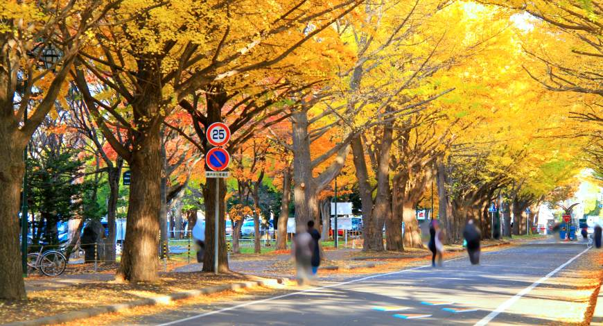 日本秋季自由行推薦必訪銀杏景點札幌北海道大學