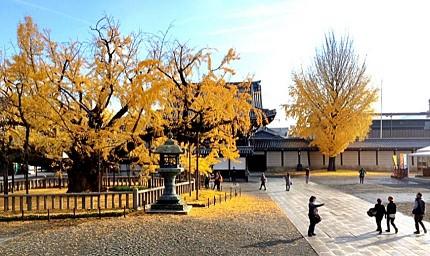 日本秋季自由行推薦必訪銀杏景點關西京都西本願寺