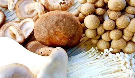菇类示意图香菇金针菇鸿禧菇杏鲍菇