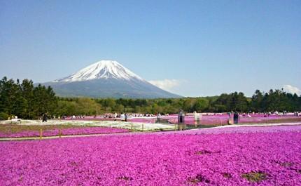 春天到日本自由行必去必做的事情是賞櫻花必吃草莓甜點必買春季限定品牌藥妝推薦櫻花景點行程