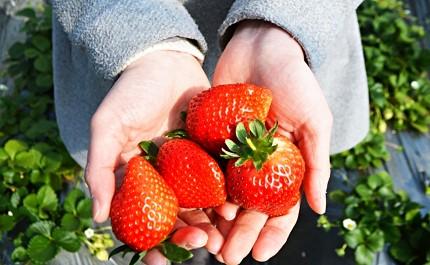 春天到日本自由行必做的事情是賞櫻花必吃草莓甜點必買春季限定品牌藥妝推薦櫻花景點行程旅遊2月3月4月5月