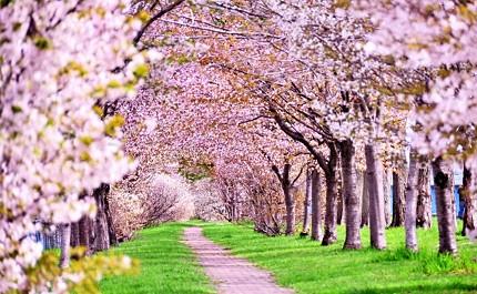 春天到日本自由行必去必做的事情是賞櫻花必吃草莓甜點必買春季限定品牌藥妝推薦櫻花景點行程旅遊2月3月4月5月