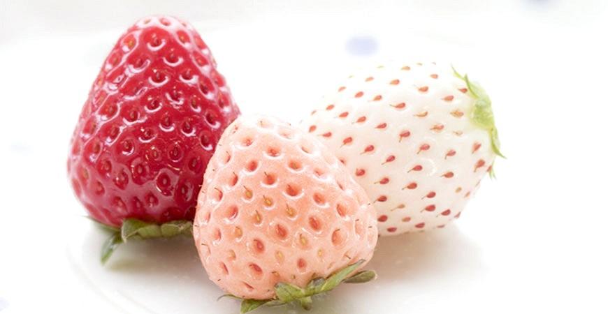 日本草莓示意圖