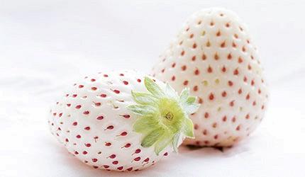 日本白色草莓天使果實示意圖