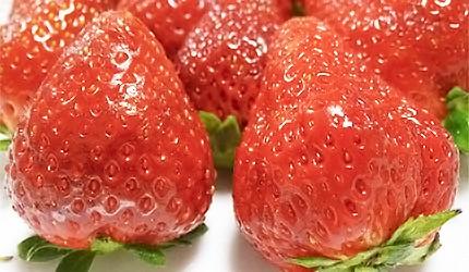 日本草莓甘王示意圖