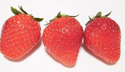 日本草莓栃木少女示意圖