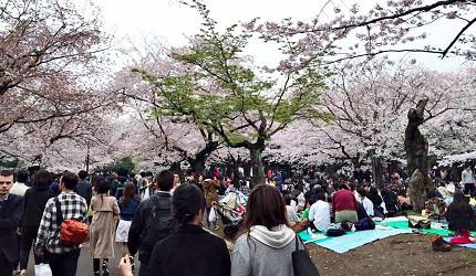 櫻花季野餐