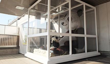 上野大小熊貓像