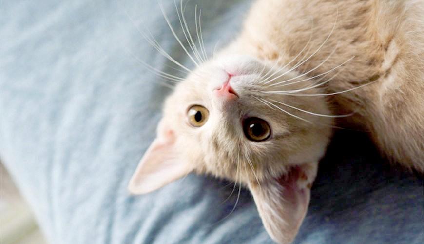 貓咪示意圖