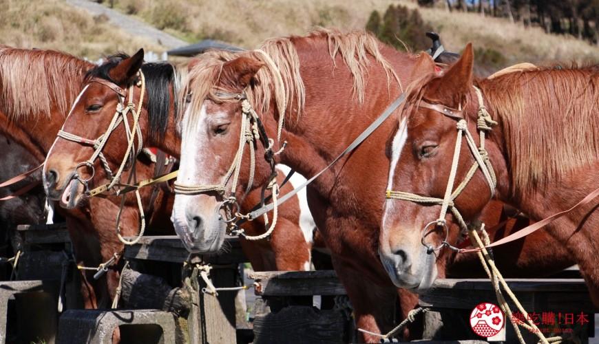 日文裡面10個常用日本諺語教學《動物篇》:馬的形象圖
