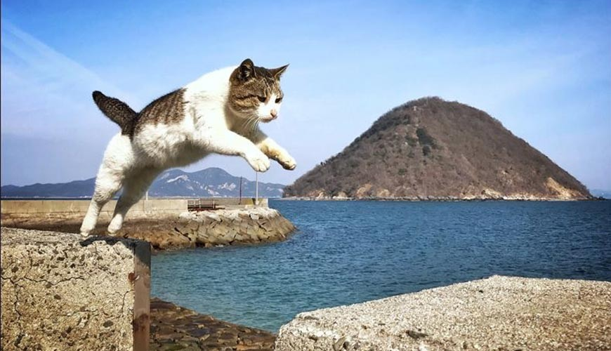 【MiCHi cafe 活动速报】猫奴们请注意!带你玩遍「日本猫岛」观光讲座开始啰!