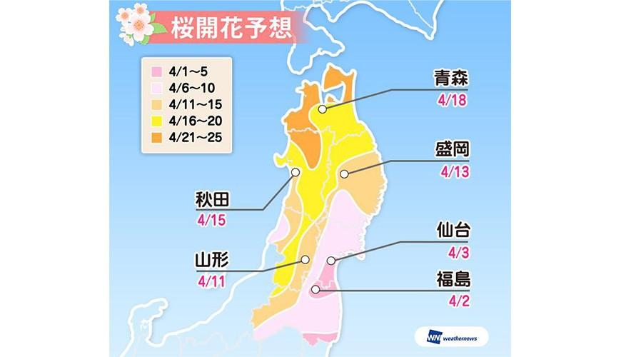 2019樱花最前缐,开花日满开日查询,日本赏樱weathermap东北地区