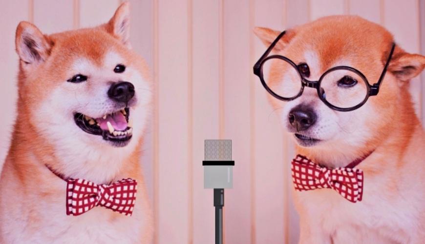 「芸人」的狗形象圖