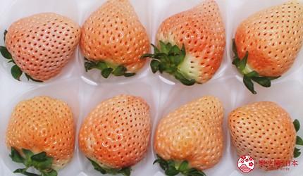 日本草莓淡雪