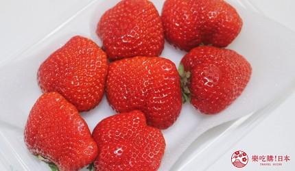 日本草莓甘王