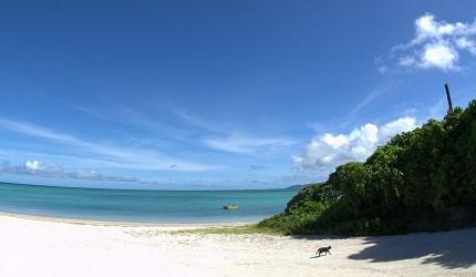 日本貓狗兔仔狐狸天鵝動物島的貓島沖繩竹富島上的海灘景色怡人