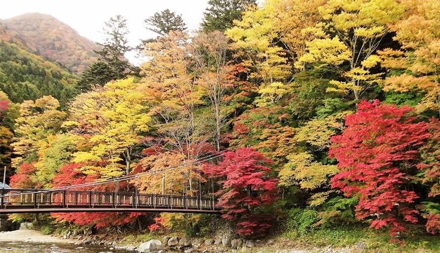 2019日本楓葉預測:日本秋季賞楓最佳時間、紅葉最前線總整理!