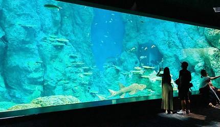 親子旅遊必去推薦四國水族館超另類騎乘海豚好刺激學校泳池養大魟魚的四國最大級海中公園的足摺海洋館SATOUMI的魚缸圖