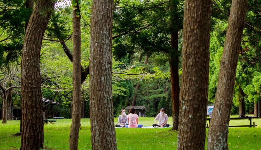 秋田必去療癒行程推薦推介白神山地櫸木林風之松原的瑜伽體驗
