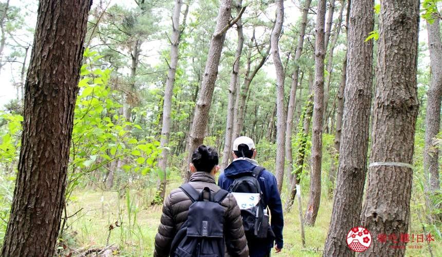 秋田必去療癒行程推薦推介白神山地櫸木林風之松原釜谷濱海濱邊的松林
