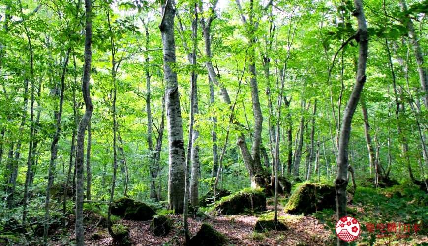 秋田必去療癒行程推薦推介白神山地櫸木林風之松原岳岱觀察林的拍照景點