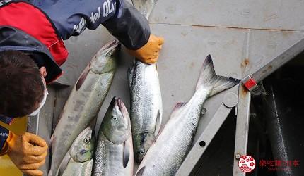 北海道最後秘境能取岬流冰絕景知床五湖療癒湖山景鄂霍次克景點推薦推介鮭魚陽台