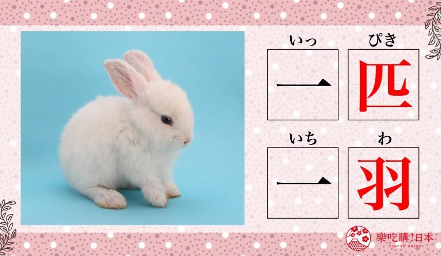 日语数量词兔子「一羽」「一匹」示意图