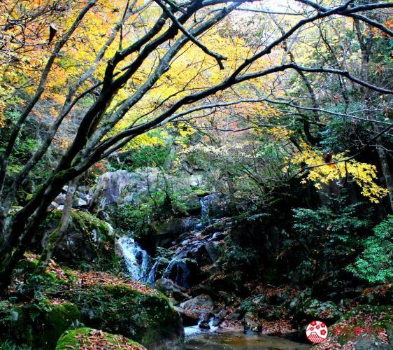 鳥取縣必去景點推薦推介鬼太郎列車大山3天2夜行程3日2夜自由行懶人包體驗型農家民宿Katsumiya聖瀧散策體驗