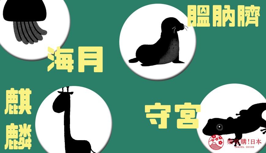 《「海月」居然是一種動物?4個日本人也不一定認得的動物漢字名稱!》首圖