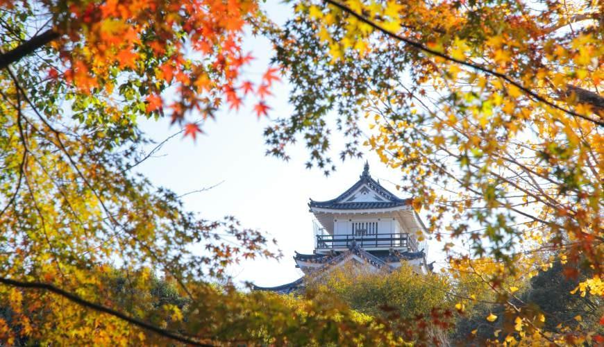 日本靜岡親子旅遊自由行必去景點推薦推介吉卜力夢幻森林空軍基地濱松城紅葉