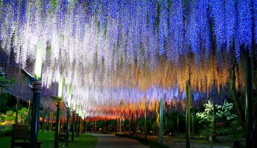 日本靜岡親子旅遊自由行必去景點推薦推介吉卜力夢幻森林空軍基地航空濱松花卉公園