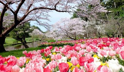 日本靜岡親子旅遊自由行必去景點推薦推介吉卜力夢幻森林空軍基地航空濱松花卉公園玫瑰庭園
