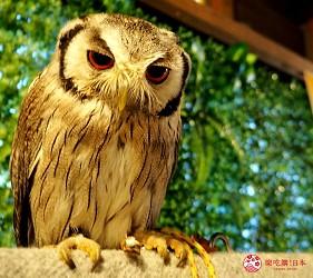日本靜岡親子旅遊自由行必去景點推薦推介吉卜力夢幻森林空軍基地航空NUKUNORI之森貓頭鷹