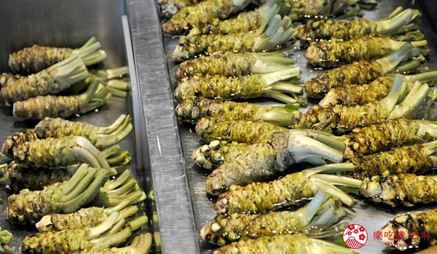 長野自由行松本安曇野景點大王山葵農場中販售的新鮮山葵