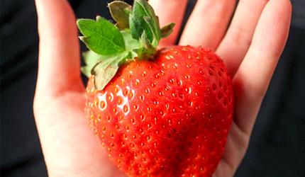 日本福岡甘王草莓禮盒進口空運高級水果禮盒