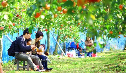 島根自由行必吃必食美食推薦推介島根和牛排山豬肉圍爐裏道地料理懷石料理日本製餐酒紅白酒莊赤來高原觀光蘋果園裡親子遊的遊客