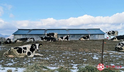 北海道必吃美食自由行景点推荐推介绍十胜带广乳牛