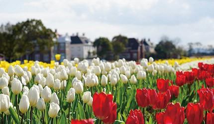 2021豪斯登堡ㄧ百萬鬱金香節