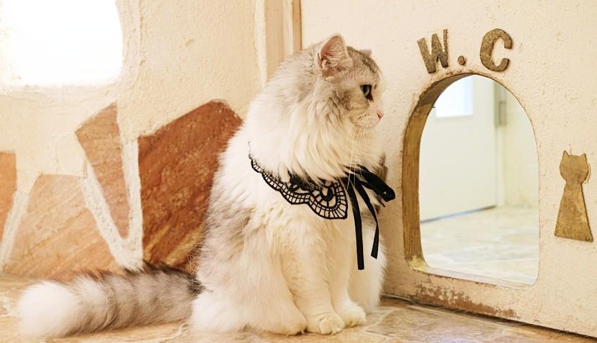 貓砂推薦貓砂盆推介藍鑽貓砂種類豆腐砂除臭用途雙層貓砂盆養貓新手入門須知