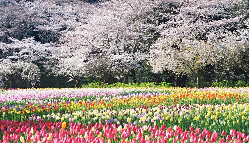 靜岡自由行景點推薦濱松市濱松花卉公園