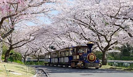 靜岡自由行景點推薦濱松市濱松花卉公園的賞花列車