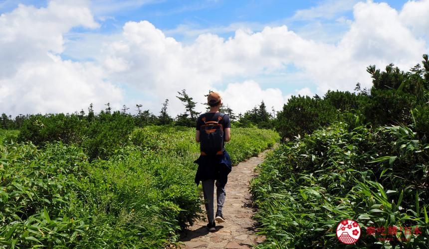 岩手縣十和田八幡平山頂步道